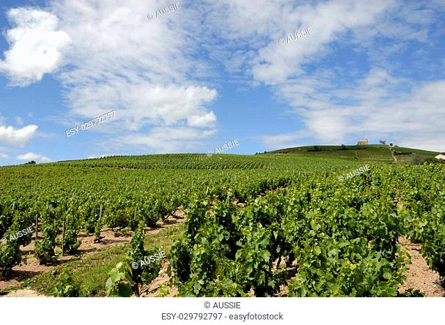 Beautiful Vineyard Landscape near Fleurie in the middle of the Beaujolais area, department Rh�ne-Alpes in France. At the brouilly mountain right is situated a...
