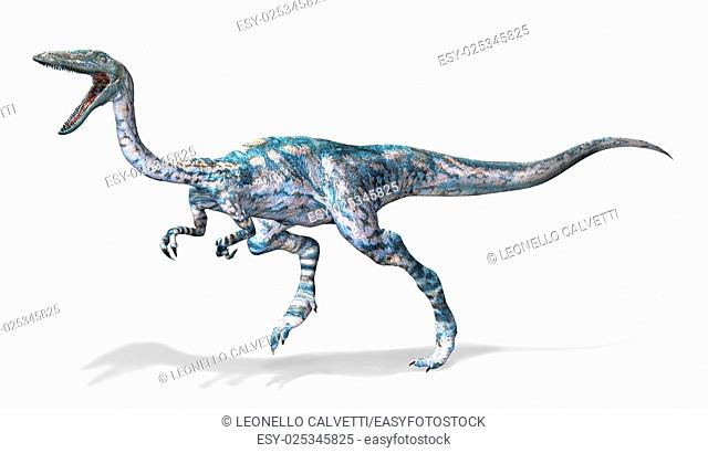 Photorealistic 3 D rendering of a Coelophysis. On white background with drop shadow and clipping path included