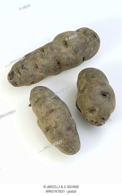 Potatoes,Solanum, tuberosus, spec
