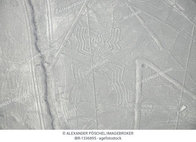 Spider, 46m, Nazca Lines, geoglyphs in the desert, Nazca, Peru, South America, Latin America