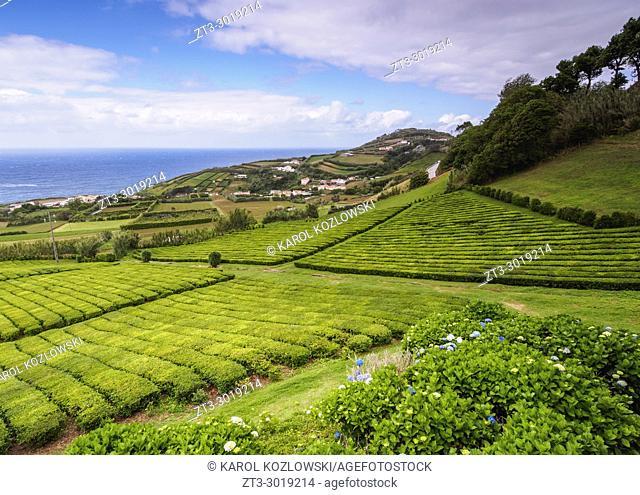 Porto Formoso Tea Fields, Sao Miguel Island, Azores, Portugal