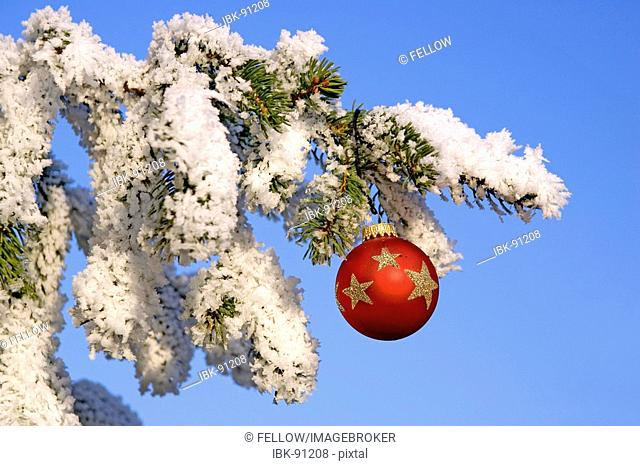 Christmas decoration on a snowy conifer