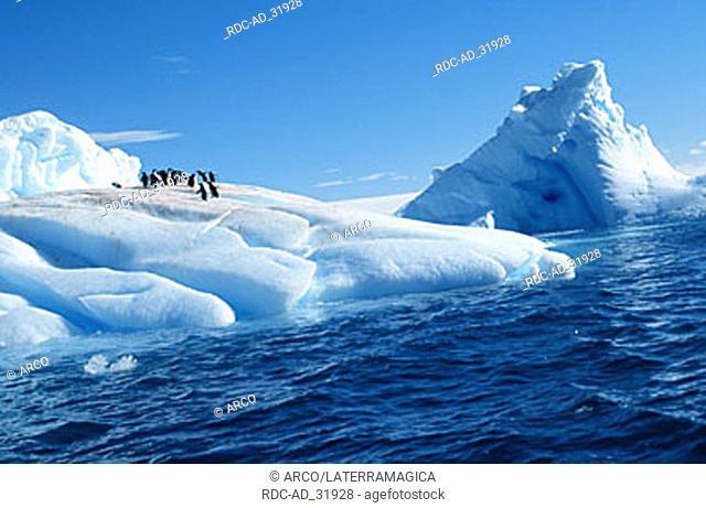 Adelie Penguins on iceberg Paulet Island Antarctica Pygoscelis adeliae