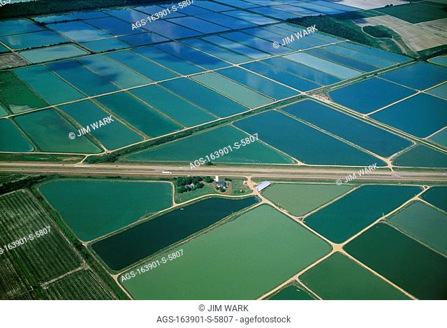 Agriculture - Aerial view of ponds at a catfish farm / MS - nr. Belzoni