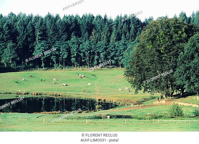 Limousin - Haute Vienne - Monts d'Aurbozac - Le petit muret
