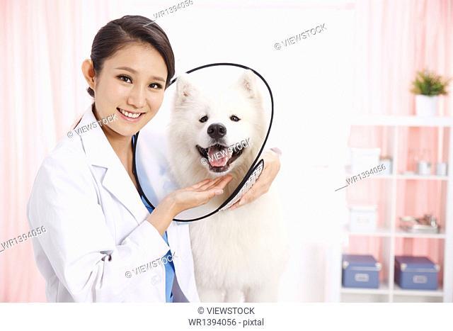 Veterinary checks to make puppy