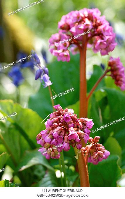 Flower, Boissy sous Saint Yon, Essonne, Ile de France, France