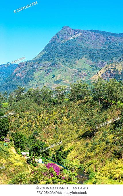 Summit in the Nuwara Eliya distric in the highlands of Sri Lanka. The area has the highest mountains on the island