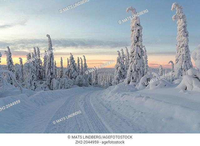 winterlandscape with a winterroad with snowy trees in sunset in december in Gällivare Swedish lapland, sweden, scandinavia