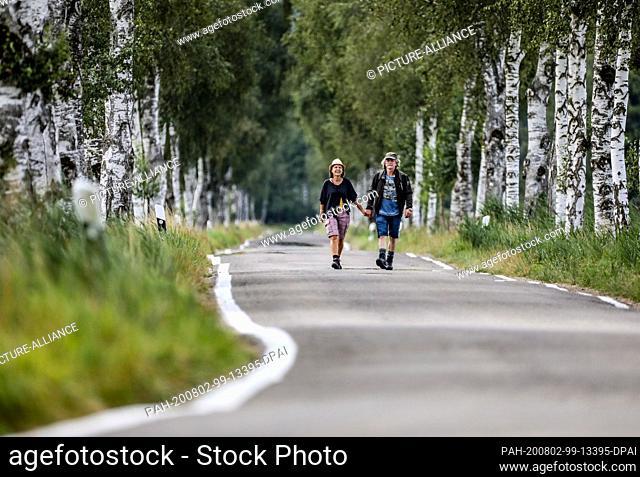 "02 August 2020, Baden-Wuerttemberg, Wilhelmsdorf-Pfrungen: Two hikers walk through an alley of birch trees in the nature reserve """"Pfrunger Ried"""""