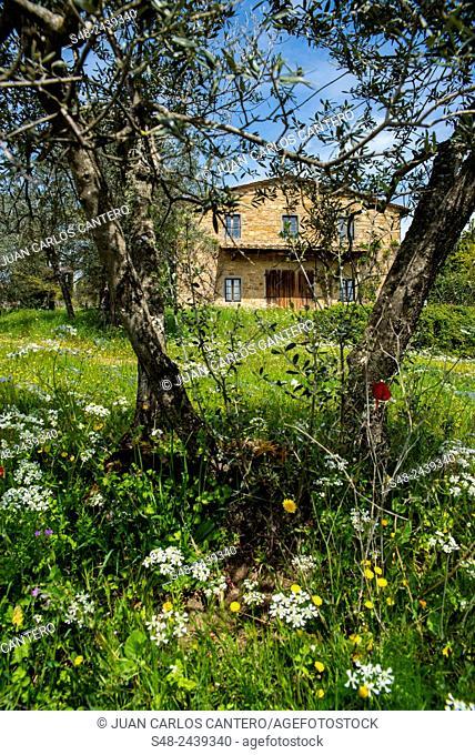 Tuscany landscape, Chianti Region, Italy