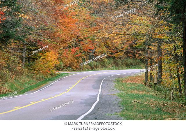 Autumn color along a highway in Pocahontas County. West Virginia, USA