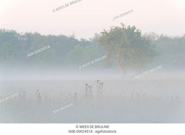 Mist over the Haagse Beemden, The Netherlands, Noord-Brabant, Haagse Beemden
