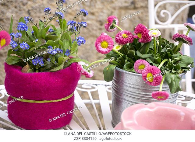 Flowerpots in pink on table in cafe Innsbruck city center Austria on April 16, 2019