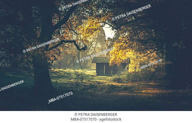 A wooden hut stands in a clearing and is illuminated by the sun