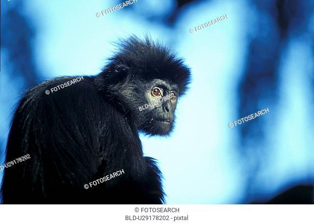 animals, apes, ape, aichner