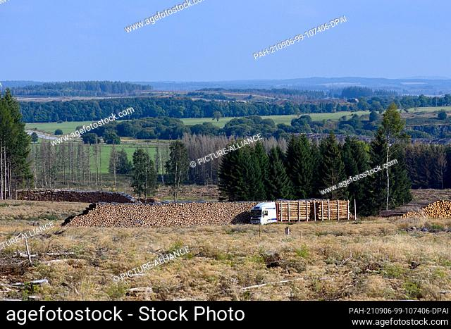 02 September 2021, Saxony-Anhalt, Oberharz am Brocken: A truck loaded with logs stands on a cleared area next to felled and stacked logs