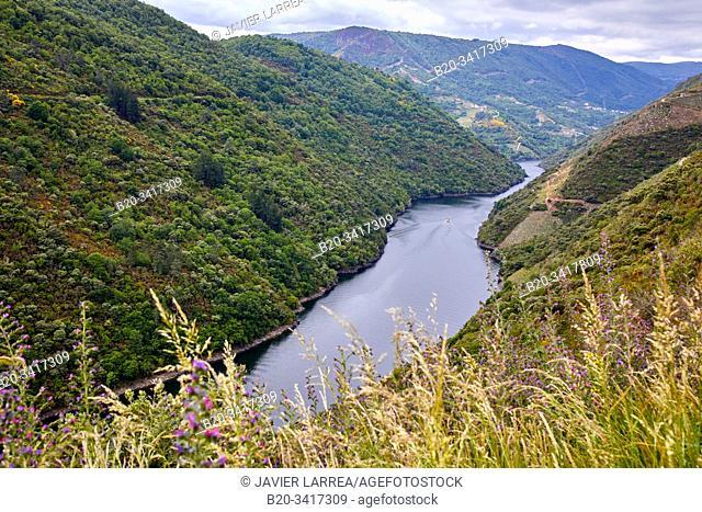Ribeira Sacra, Heroic Viticulture, Sil river canyon, Doade, Sober, Lugo, Galicia, Spain