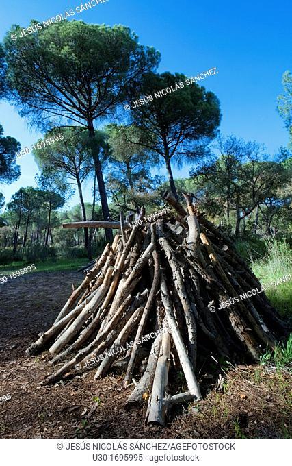 Pile of logs in La Balsa village, in Doñana National Park, Huelva province  Andalusia  Spain