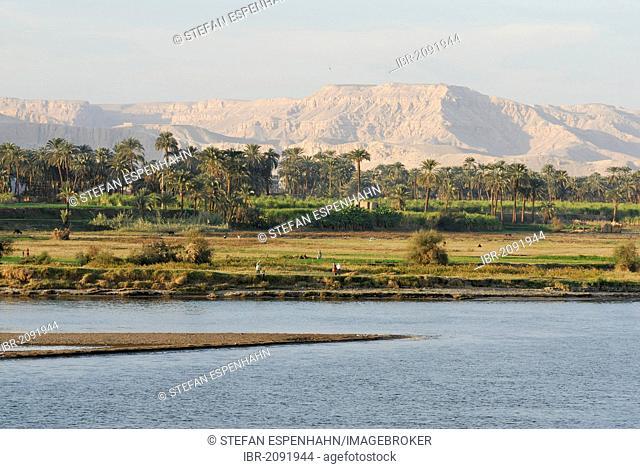Shoreline along the Nile, Luxor, Nile Valley, Egypt, Africa