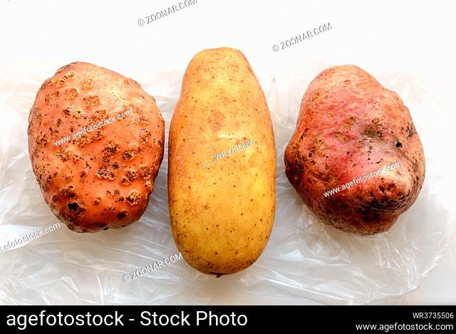 Three different kind of natural potatoes (Solanum tuberosum) on a white transparent cellophane bag