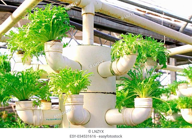 Lettuce soilless cultivation of three dimensional pipeline, Qinhuangdao, China