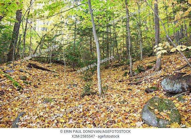 Remnants of main street, near â. œRailroad Rowâ. . , at the abandoned town of Livermore during the autumn months. This was a logging town in the late 19th and...