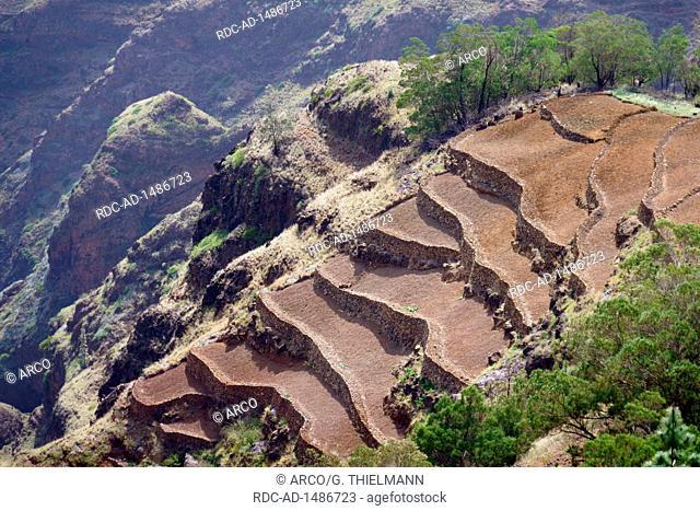 Field Terraces near Pico da Cruz, Highlands of Santo Antao Island, Cape Verde, Africa