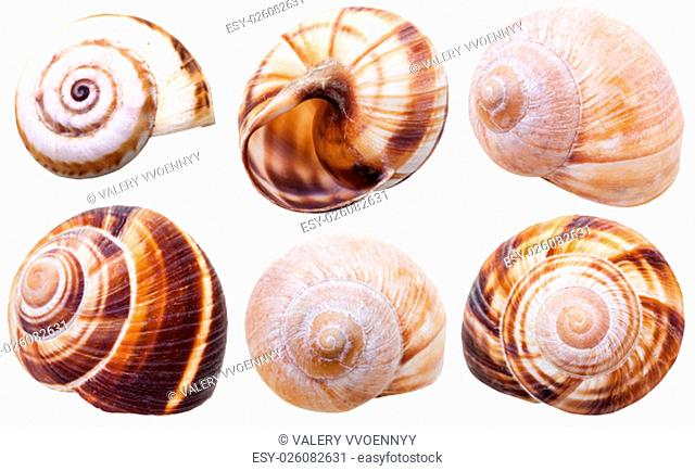 set of spiral mollusc shells of land snails isolated on white background