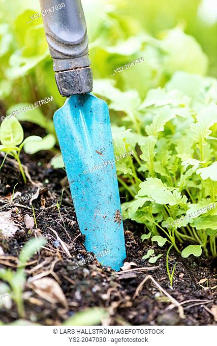 Close up of blue stainless garden spade stuck in the dirt