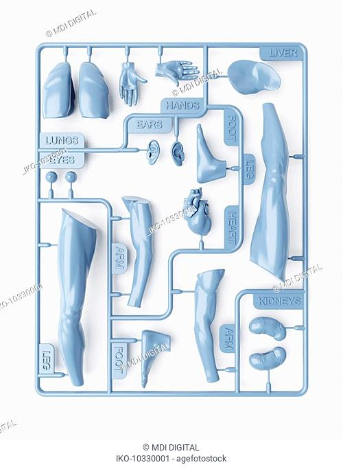 Plastic sheet of removable body parts