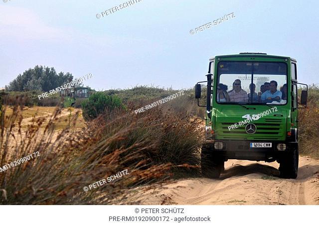 Tourist vehicle Sanddunes in the Donana National parc, Natura, Donana National Parc, Andalusia, Spain, Europe