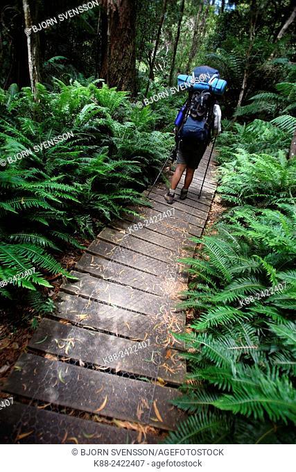 Bushwalker in Wilsons Promontory National Park. Victoria, Australia