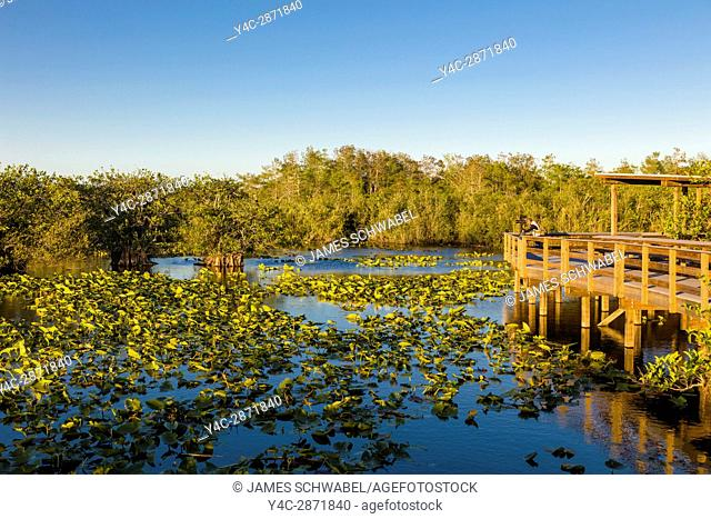 The popular Anhinga Trail at the Royal Palms Visitor Center though sawgrass marsh in the Everglades National Park Florida