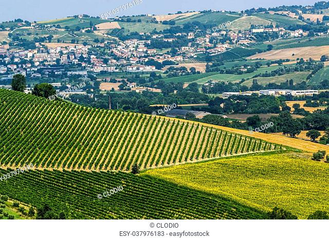 Marches (Italy) - Landscape at summer near Jesi