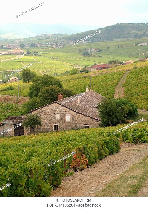 France, Brouilly, Rhone-Alpes, Europe, vineyards, wine producing region