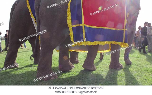 Elephant Festival,Jaipur, Rajasthan, India