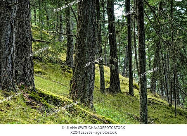 Mount Erskine, Salt Spring Island, British Columbia, Canada