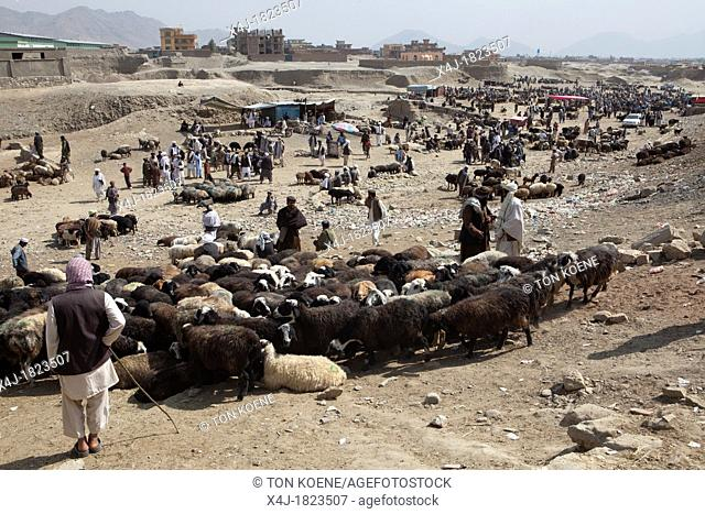 livestock market in kabul, Afghanistan