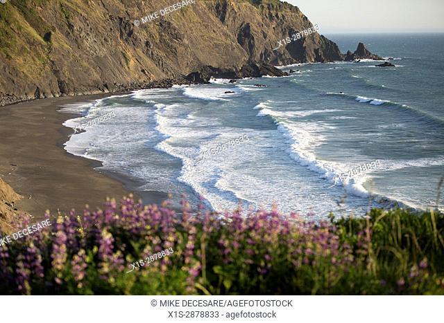 Colorful wild flowers frame white waves entering an Oregon coastal bay