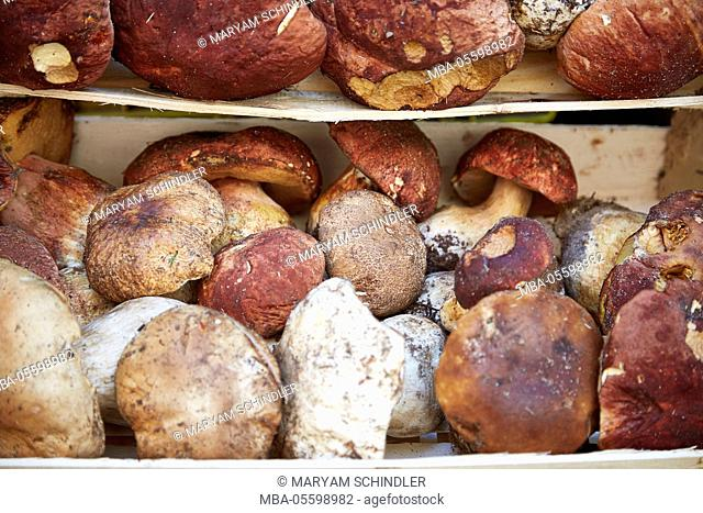Porcini in wooden box, fresh, close-up, Tuscany, Italy