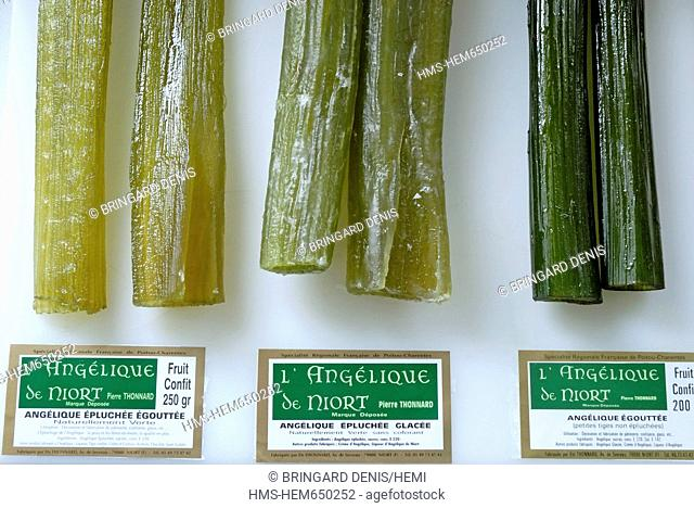 France, Deux Sevres, Niort, Thonnard institutions, manufacturing, stems candied Angelica Angelica archangelica