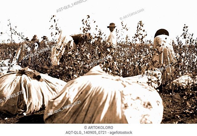 Picking cotton, Jackson, William Henry, 1843-1942, Cotton plantations, Harvesting, 1880
