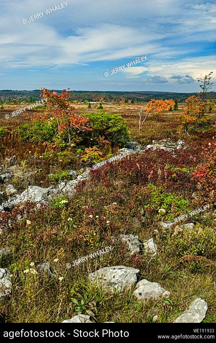 Autumn Colors at Dolly Sods in the Monongahela National Forest in West Virginia
