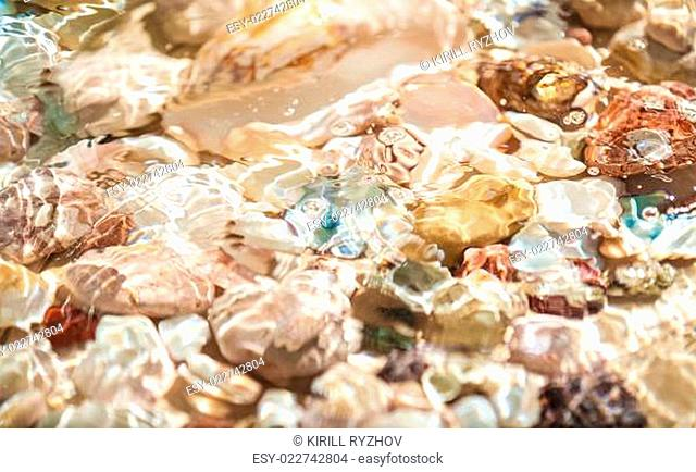 seashells and pearl lying on sea shore underwater
