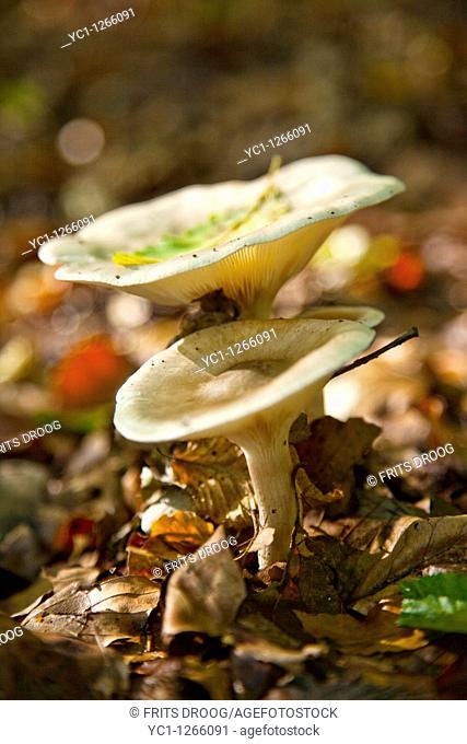 toadstools in autumn, fungi