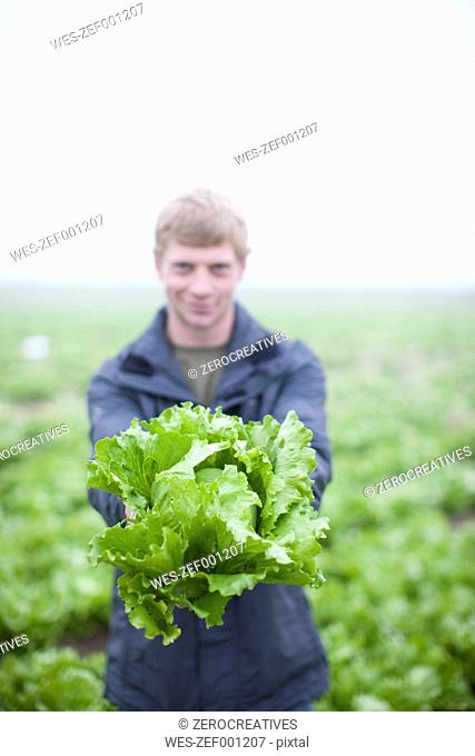 Young man presenting organic head of lettuce on field