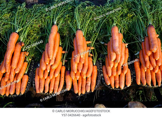 Carrots on sale on the RN7 close to Antsirabe, Central Madagascar