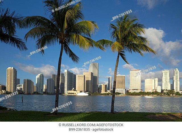 Palm Trees Watson Island Downtown Skyline Biscayne Bay Miami Florida Usa