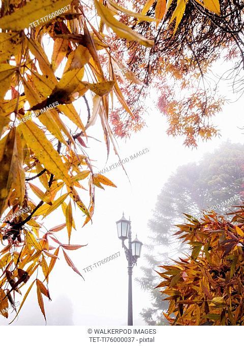Street lamp in fog in autumn